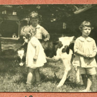 Three children beside a calf