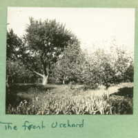 Front orchard
