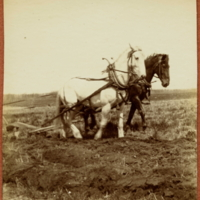 Two horses Plowing