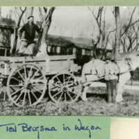 "Ted Bergsma (farmer's son, once at Ragdale was everything ""gardener etc"") in horse drawn wagon"