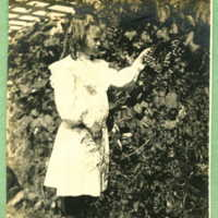 Sylvia picking grapes in the arbor