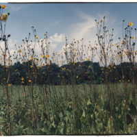 Native prairie plants in the Prairie